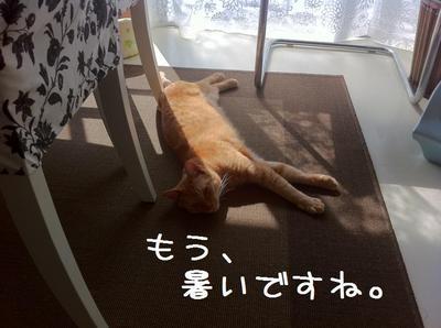みかん.jpg