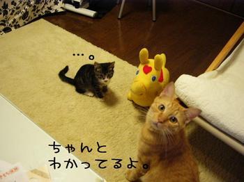 みかんとご対面3.jpg