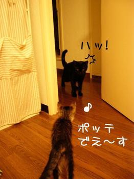 ココとご対面.jpg