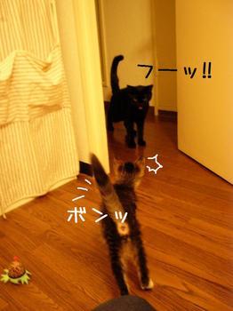 ココとご対面2.jpg