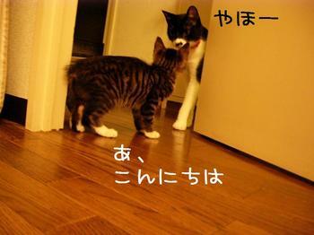 ロビンとご対面.jpg