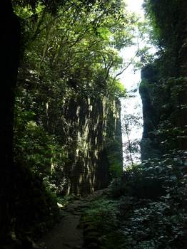 木漏れ日のトンネル.jpg